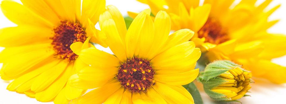 S-yellow-flower